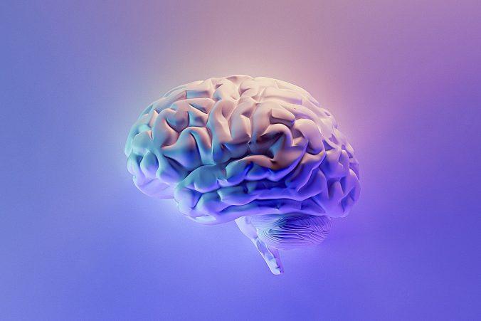 Menschliches Gehirn Schema